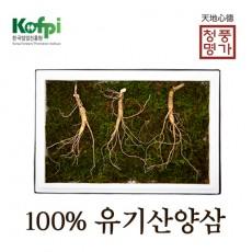 산양산삼 11년근 3뿌리
