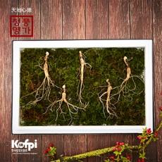 유기농 산양산삼 11년근 5뿌리